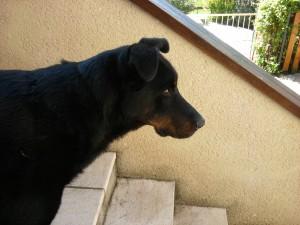 Mes chiens et chats 2011-09-10-12.26.591-300x225