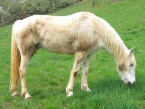 Mes chevaux 2012-04-08-15.41.45-300x225