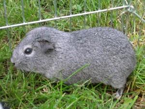 Les animaux de ma soeur 2012-05-06-15.58.09-300x225