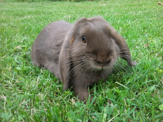 rencontre lapin belier