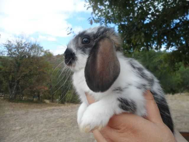 Nouvelle et dernière lapine !!! sam_94011